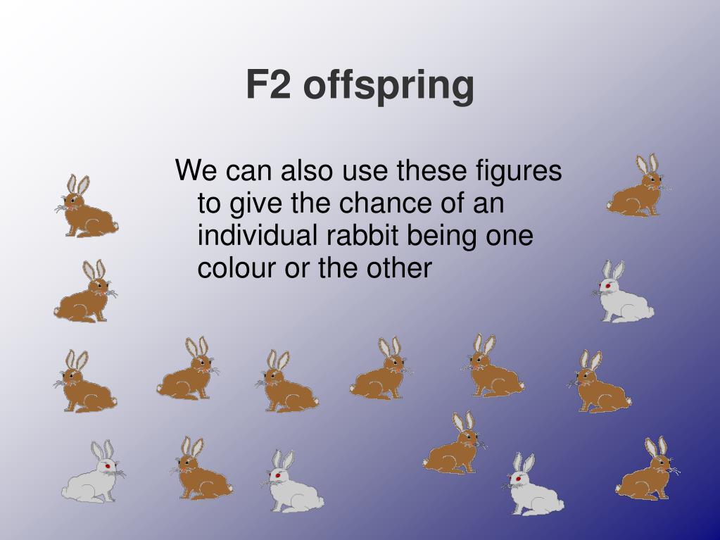 F2 offspring