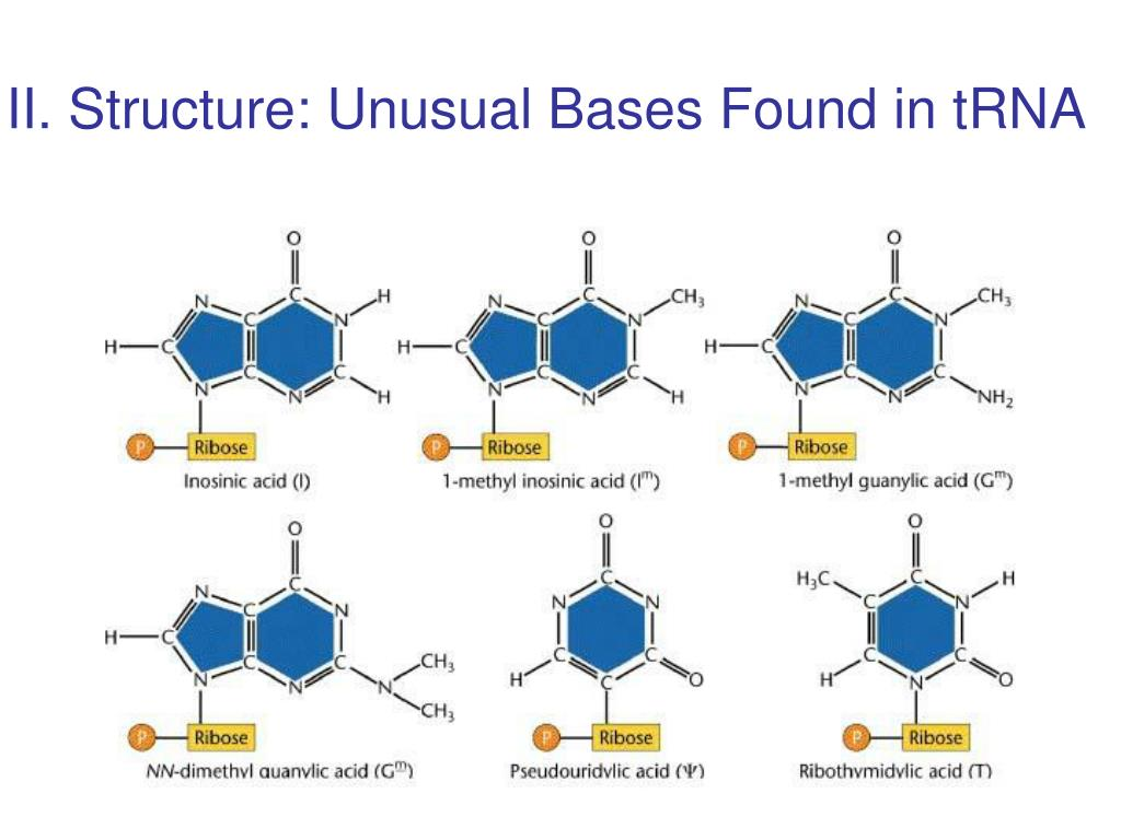 II. Structure: Unusual Bases Found in tRNA