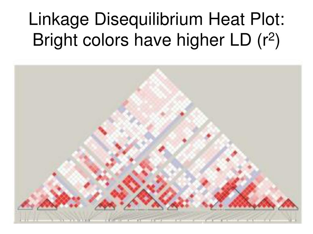 Linkage Disequilibrium Heat Plot: Bright colors have higher LD (r