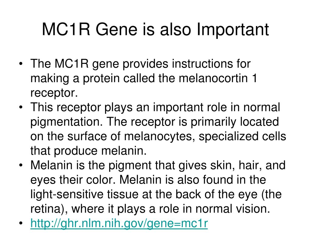 MC1R Gene is also Important