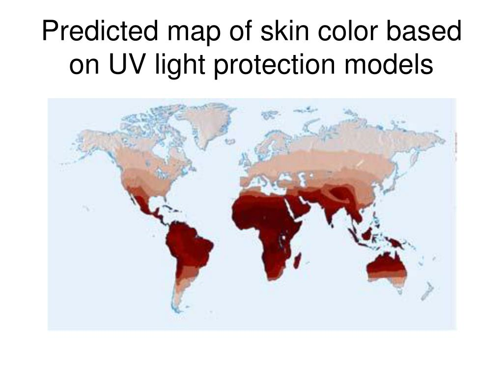 Predicted map of skin color based on UV light protection models