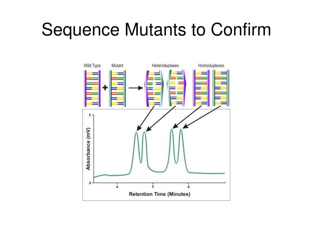 Sequence Mutants to Confirm