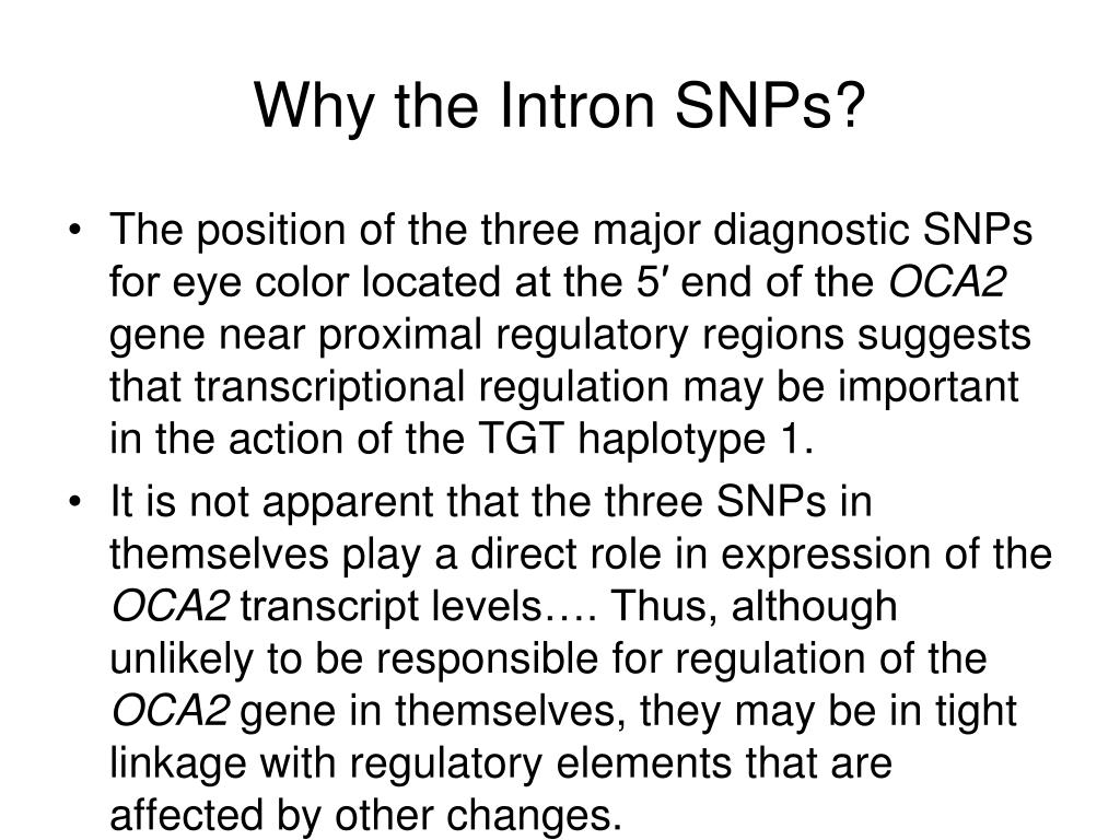 Why the Intron SNPs?