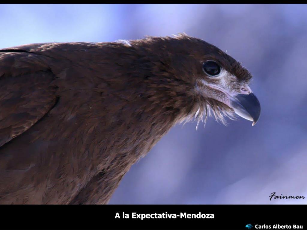 A la Expectativa-Mendoza