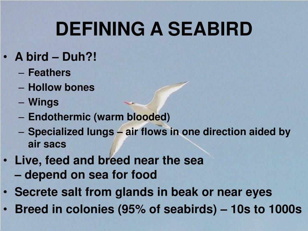 DEFINING A SEABIRD