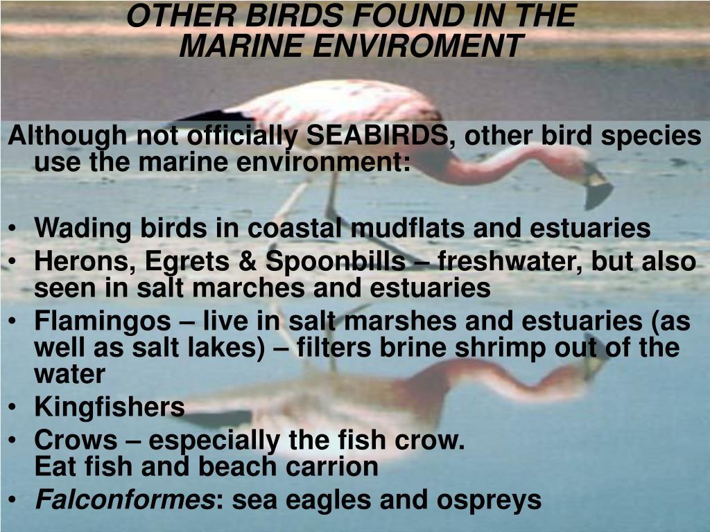 OTHER BIRDS FOUND IN THE MARINE ENVIROMENT
