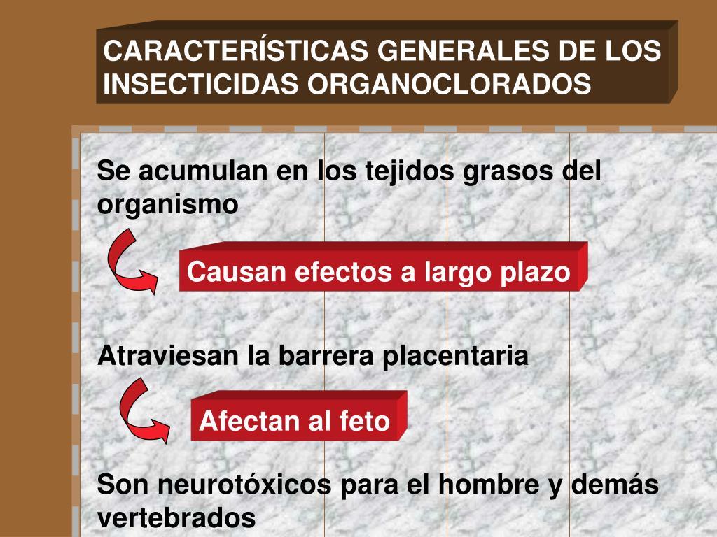 CARACTERÍSTICAS GENERALES DE LOS
