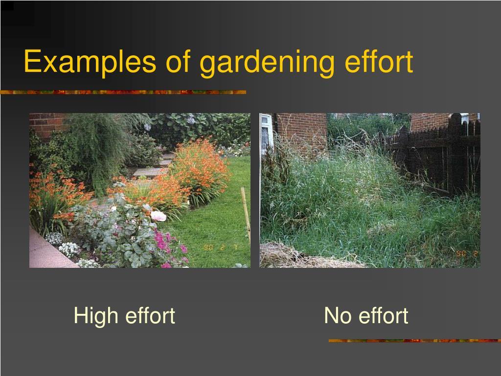 Examples of gardening effort