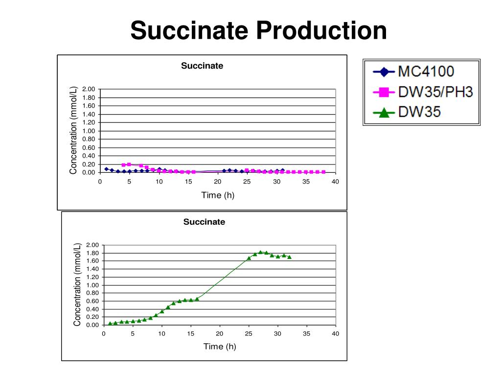 Succinate Production