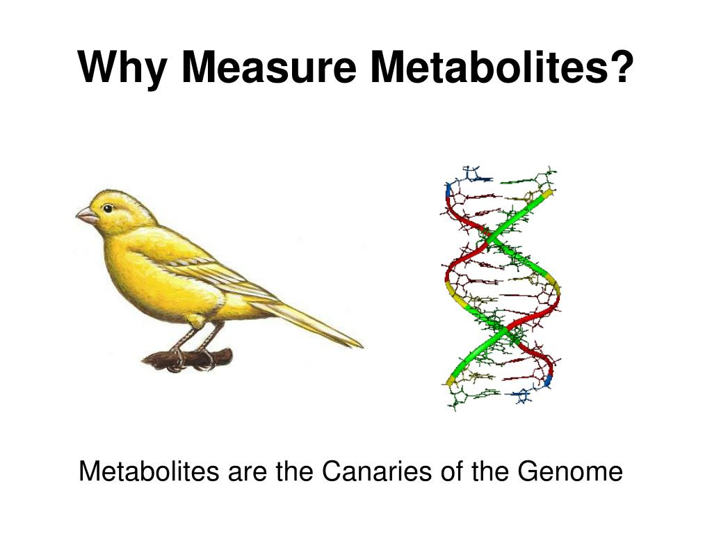 Why Measure Metabolites?