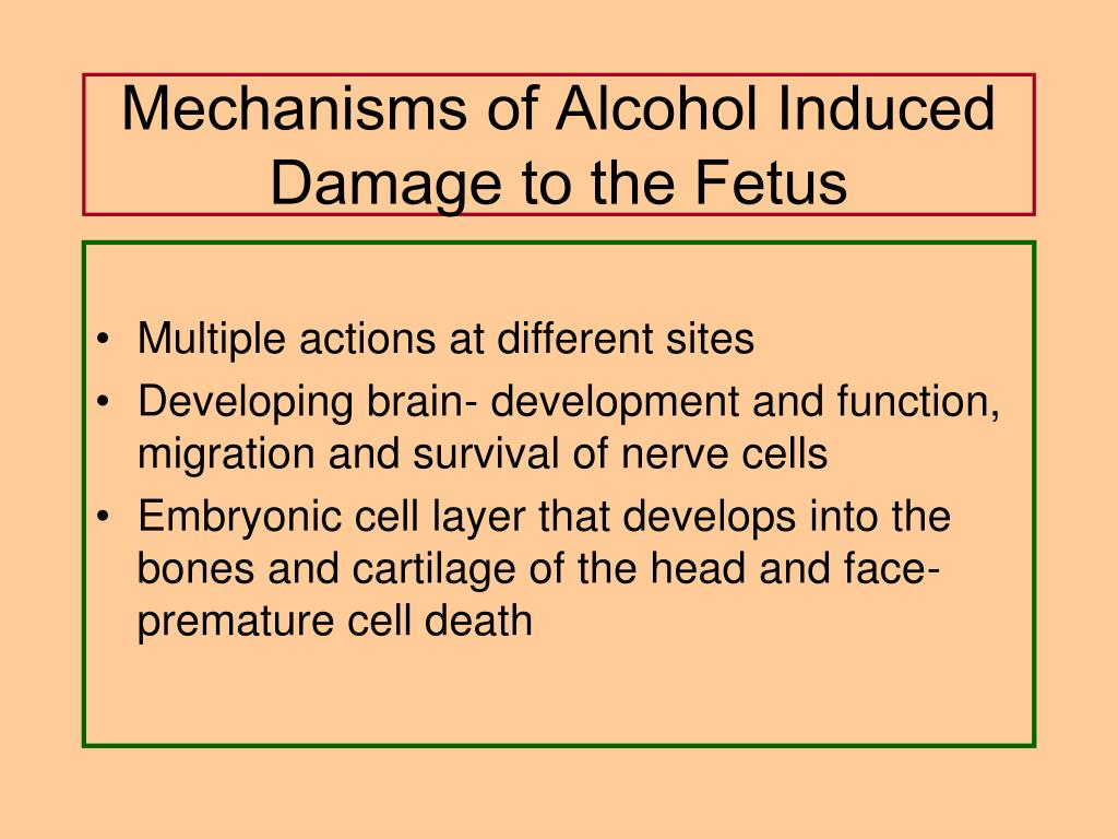 Mechanisms of Alcohol Induced Damage to the Fetus