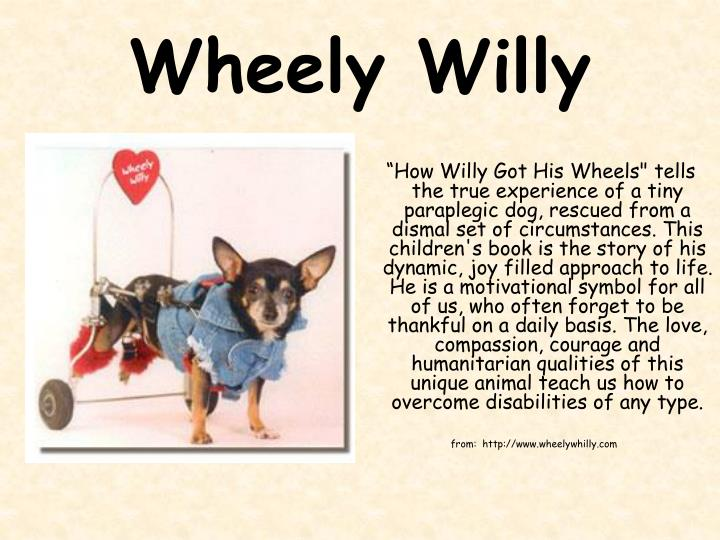 Wheely Willy