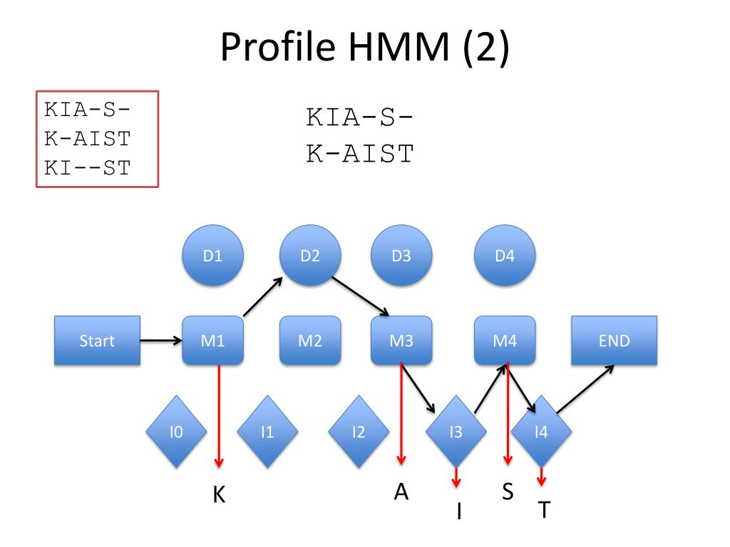 Profile HMM (2)