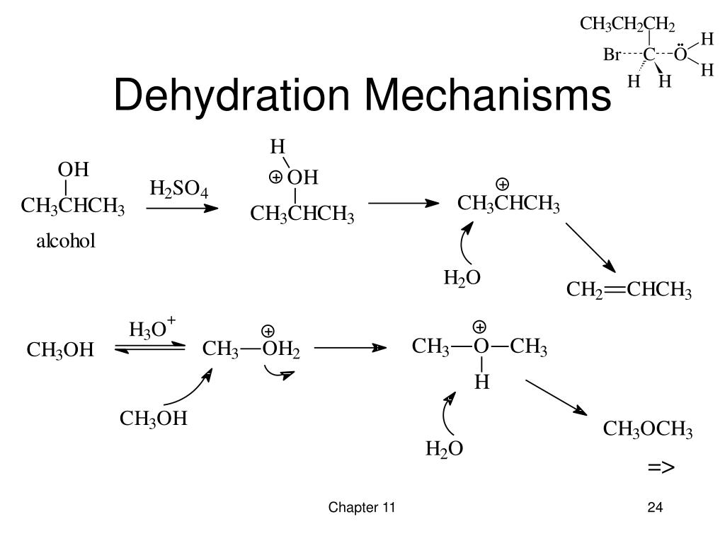 Dehydration Reaction Diagram PPT - Chapter 11 React...
