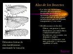 alas de los insectos