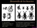 desarrollo de los insectos