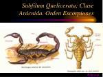 subfilum quelicerata clase ar cnida orden escorpiones