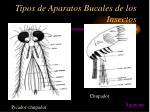 tipos de aparatos bucales de los insectos