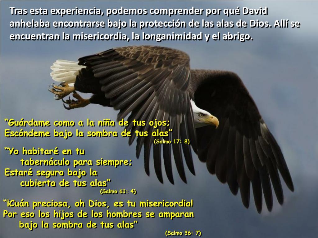 Tras esta experiencia, podemos comprender por qué David anhelaba encontrarse bajo la protección de las alas de Dios. Allí se encuentran la misericordia, la longanimidad y el abrigo.