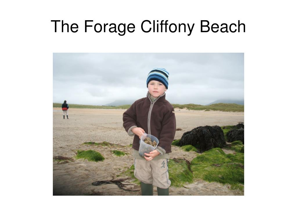 The Forage Cliffony Beach
