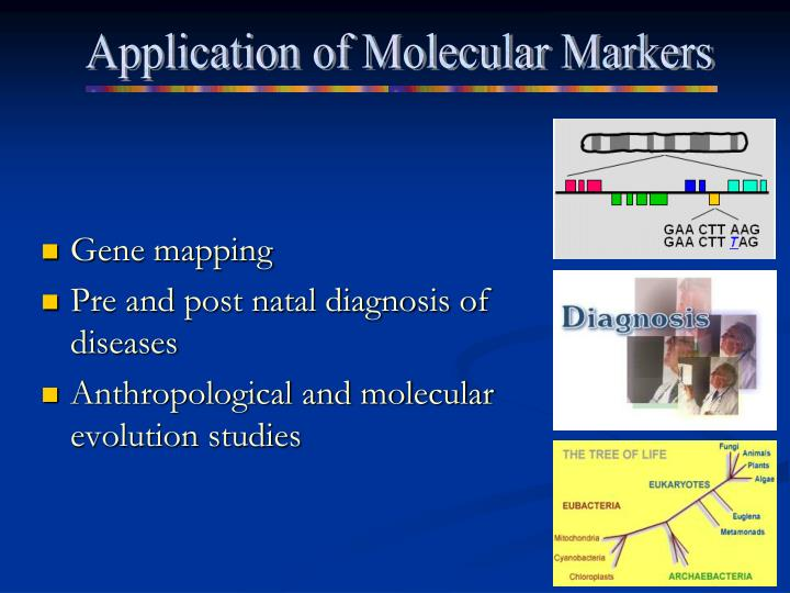 Application of Molecular Markers