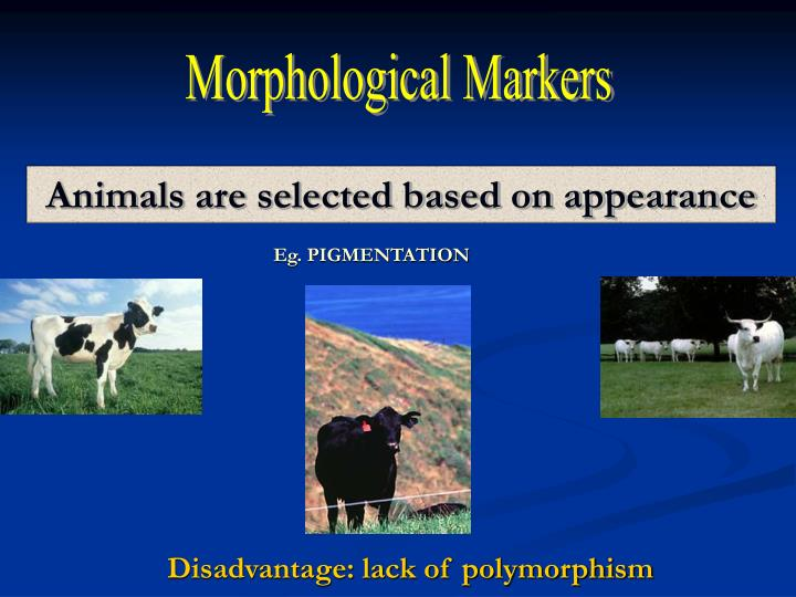 Morphological Markers