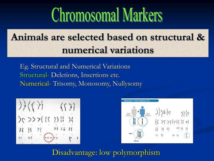 Chromosomal Markers