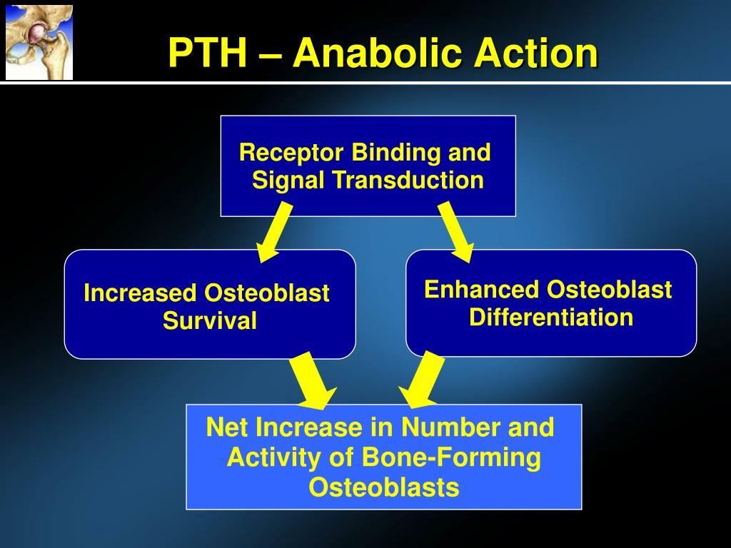 PTH – Anabolic Action