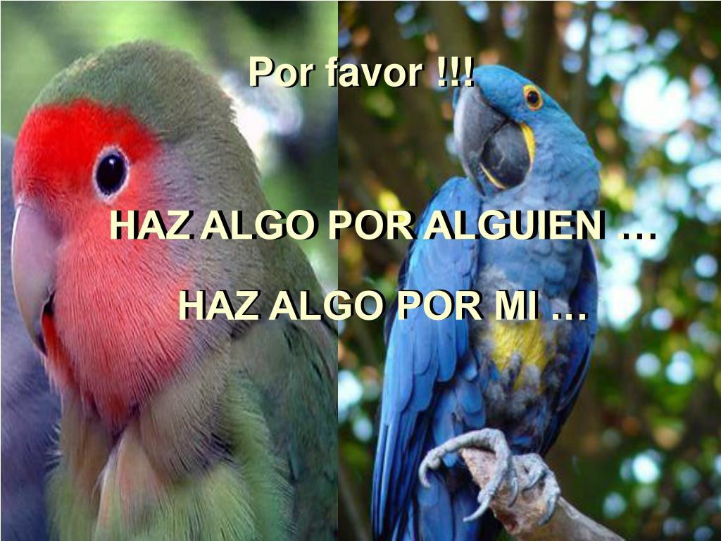 Por favor !!!