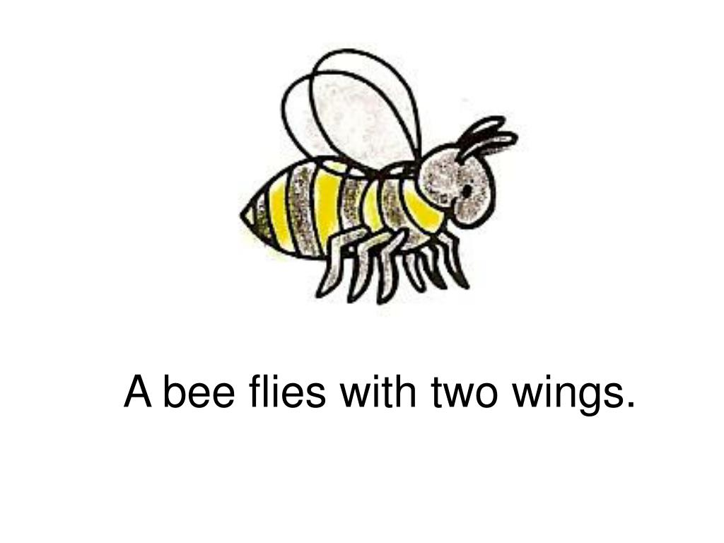 A bee flies with two wings.