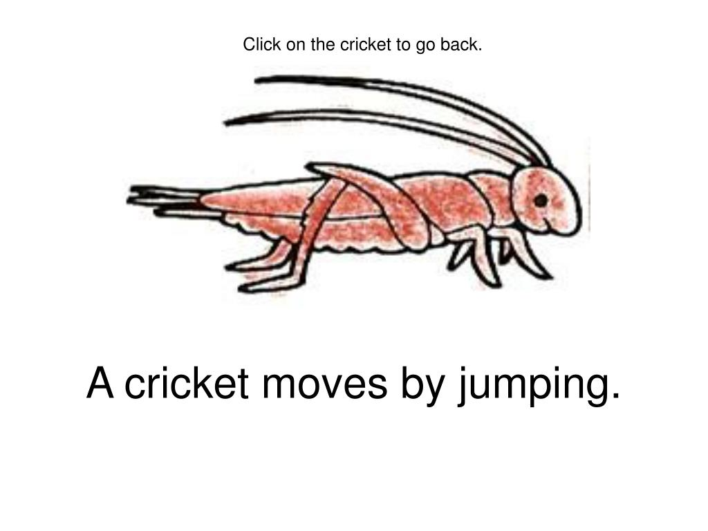 A cricket moves by jumping.