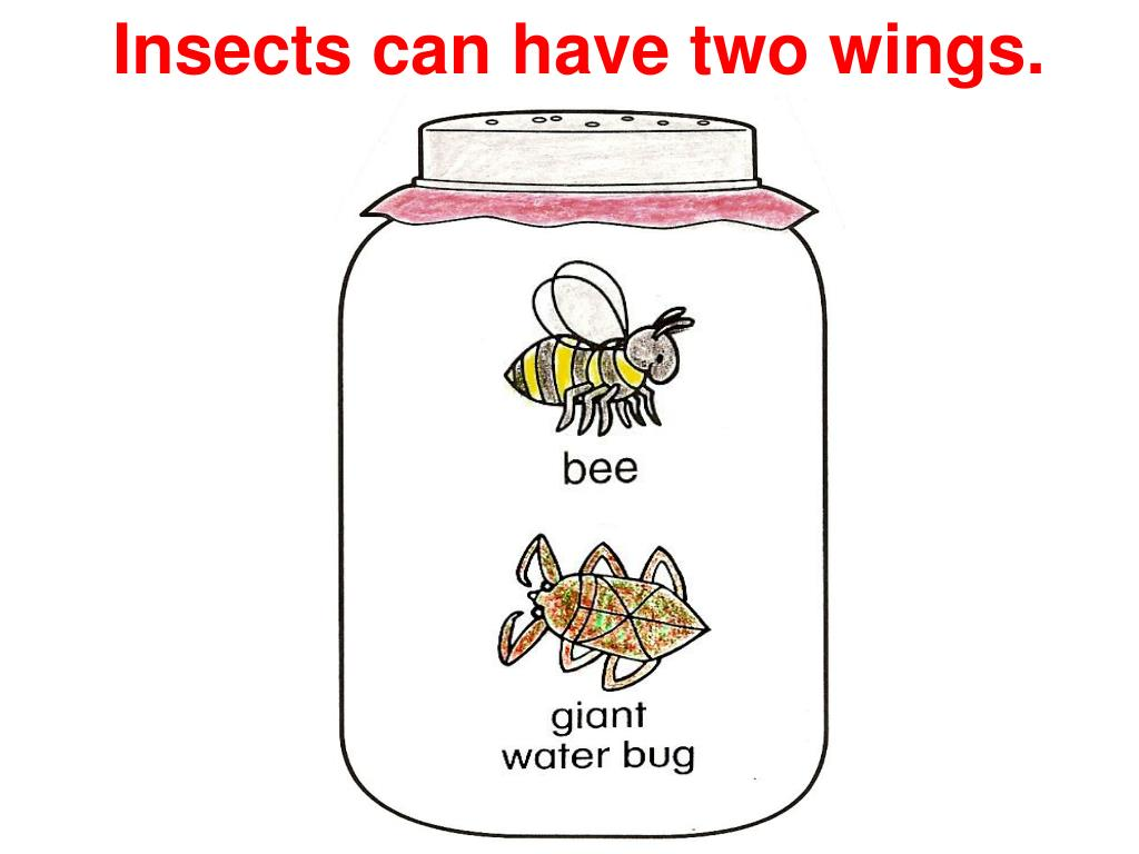 Insects can have two wings.