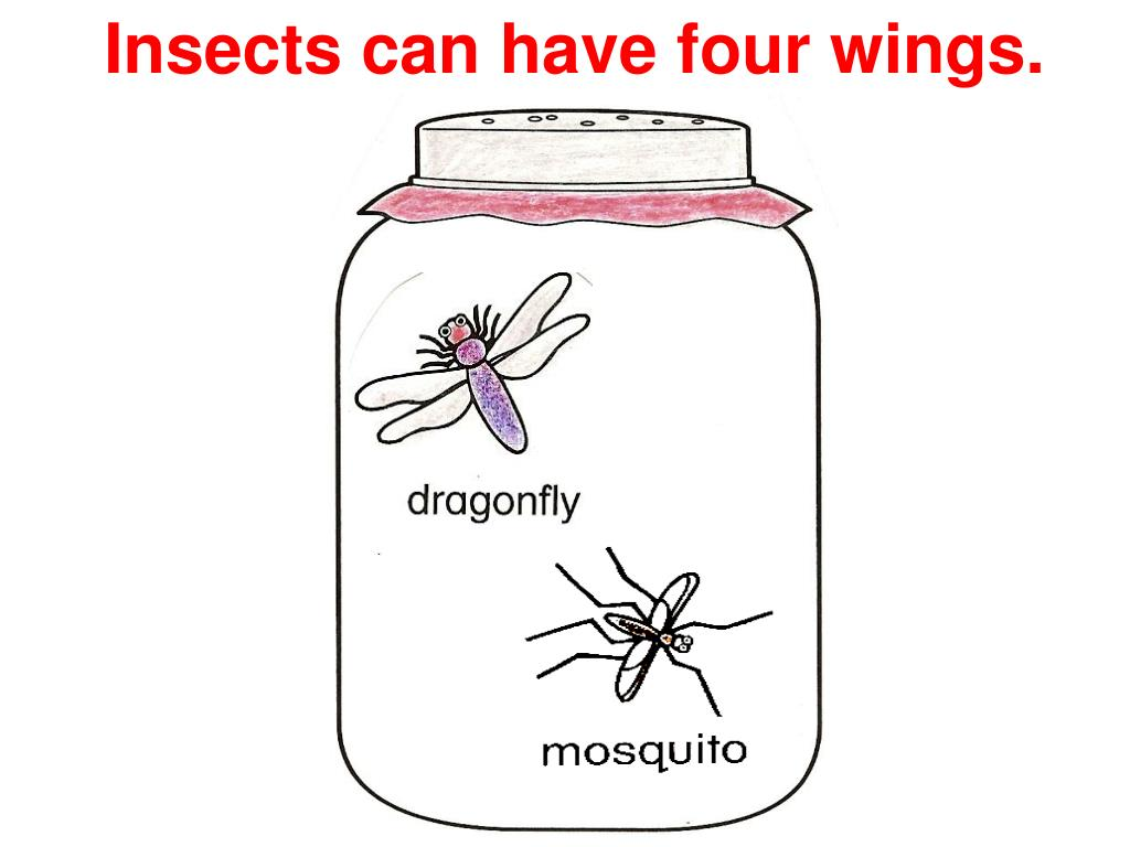 Insects can have four wings.
