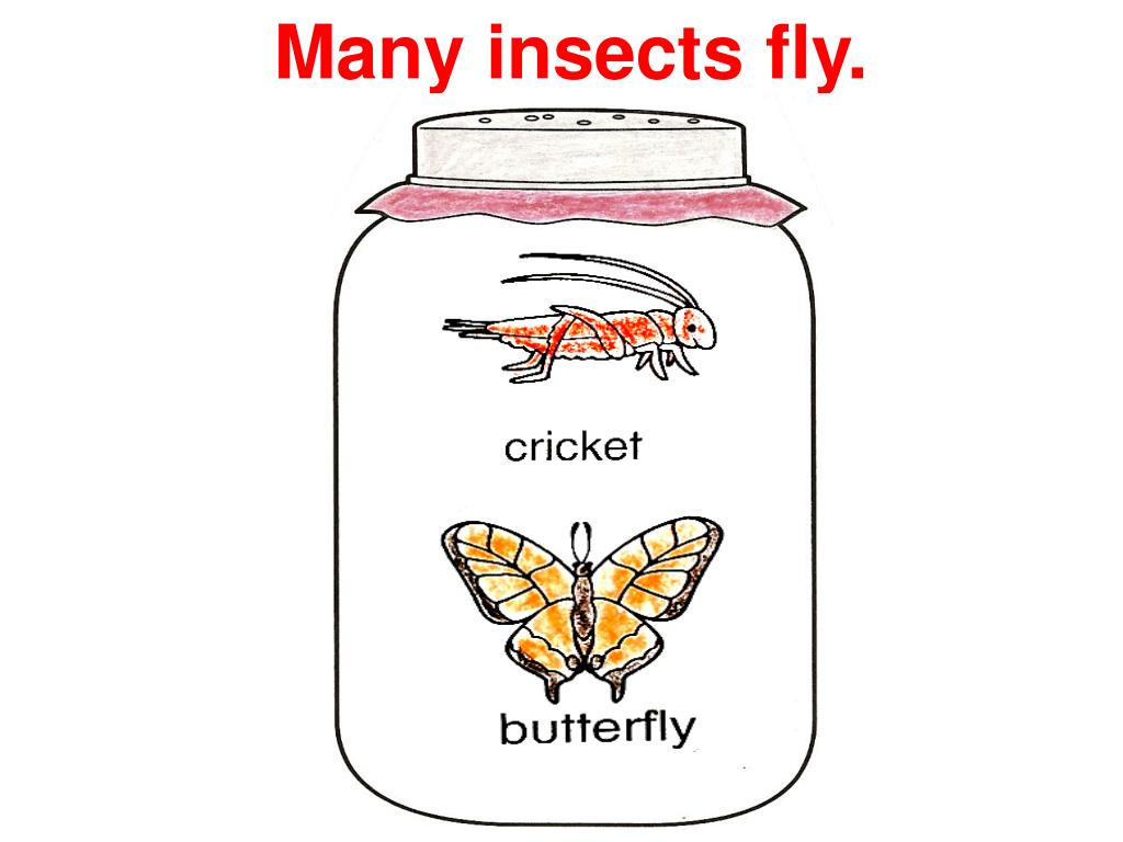 Many insects fly.