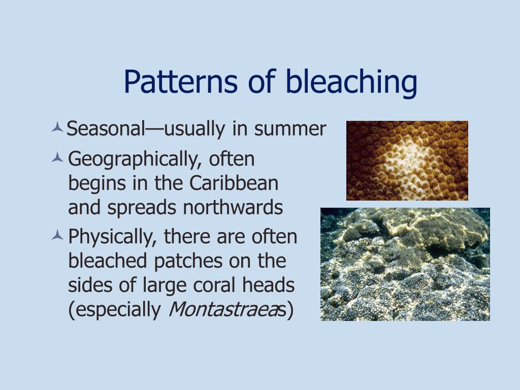 Patterns of bleaching
