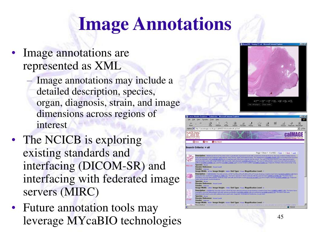 Image Annotations