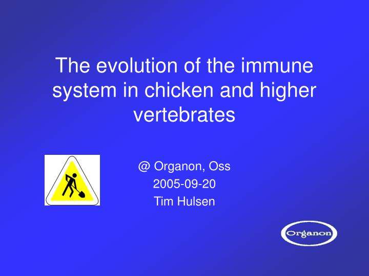 The evolution of the immune system in chicken and higher vertebrates l.jpg