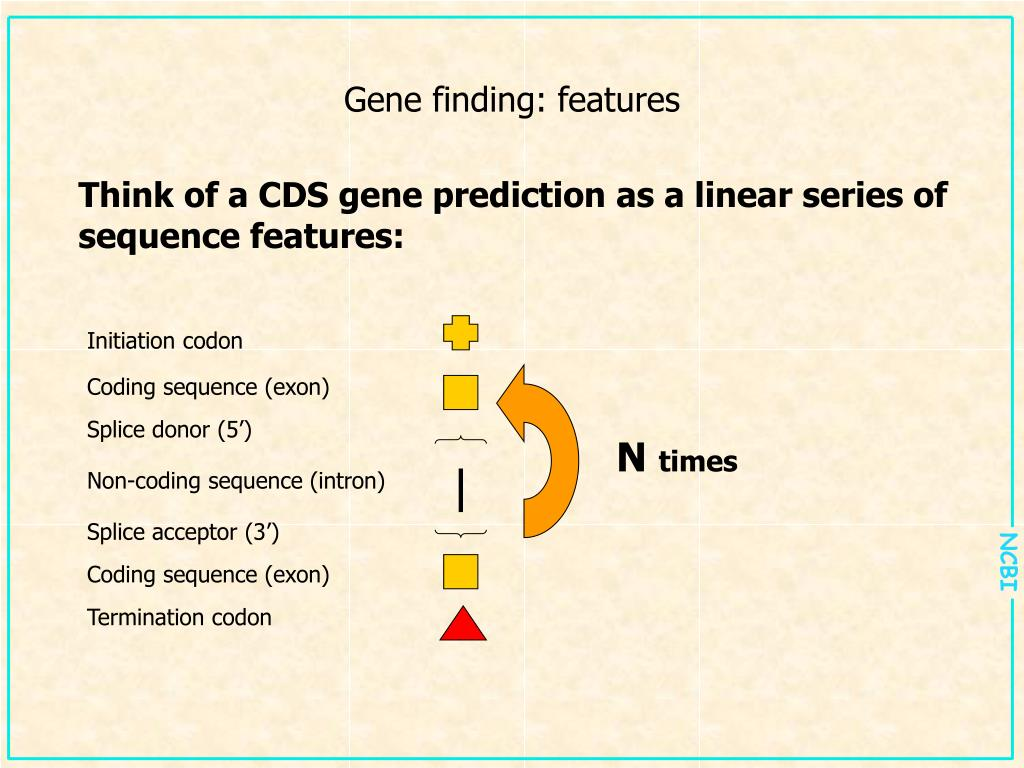 Gene finding: features