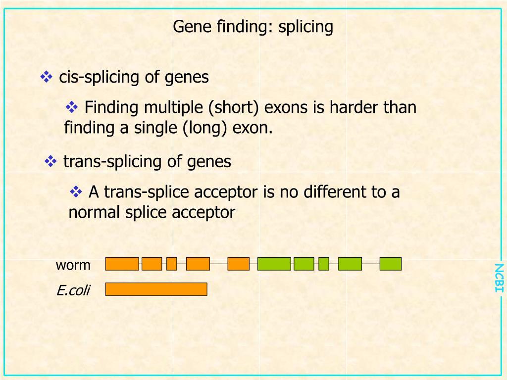 Gene finding: splicing