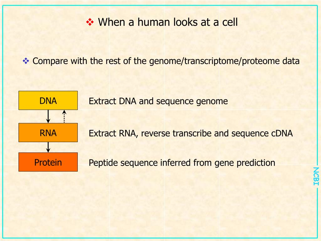 Extract DNA and sequence genome
