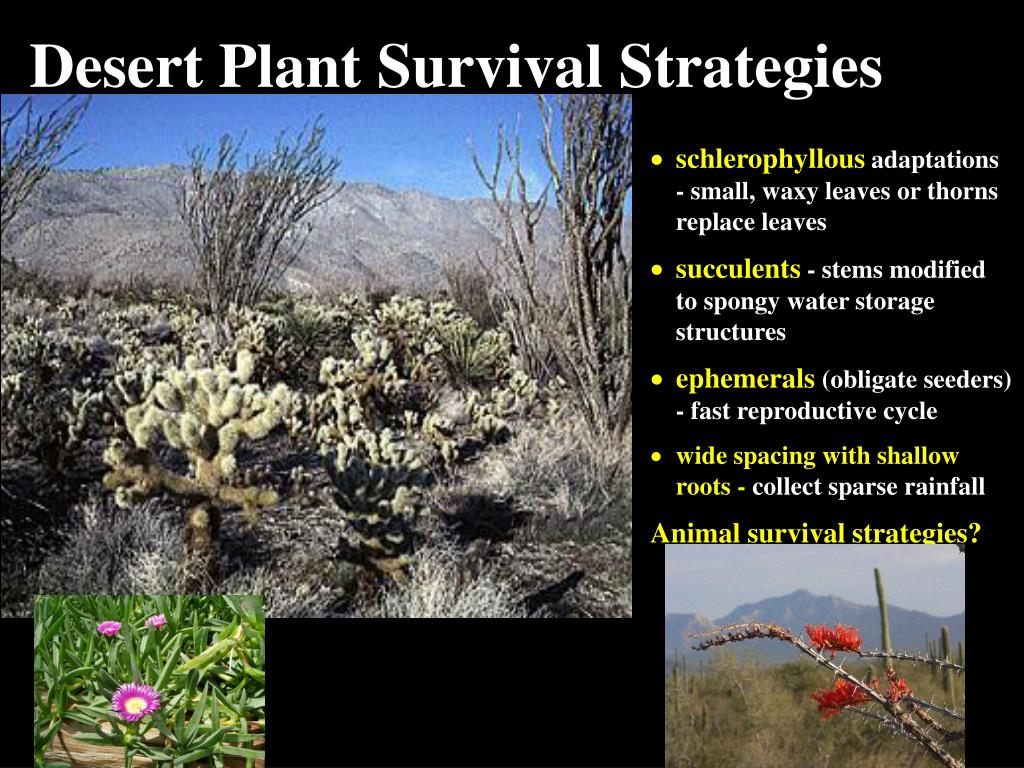 Desert Plant Survival Strategies