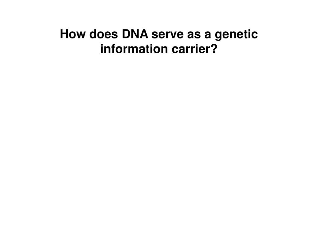 How does DNA serve as a genetic information carrier?