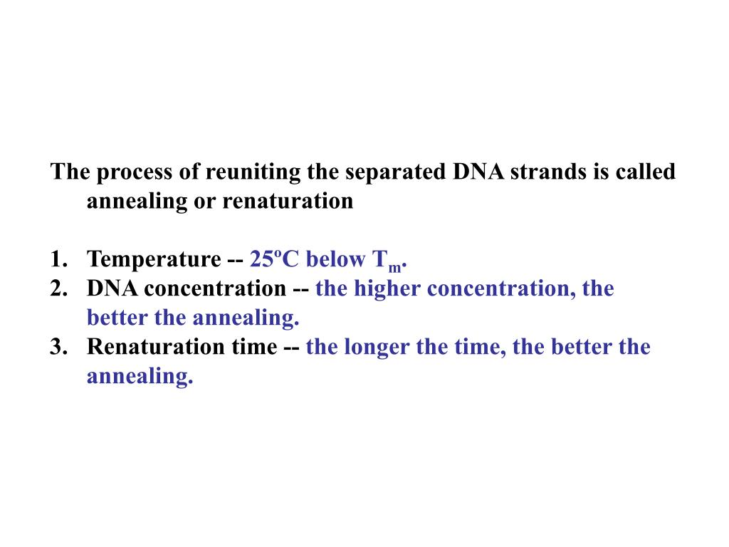 The process of reuniting the separated DNA strands is called annealing or renaturation