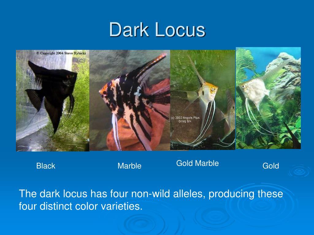 Dark Locus
