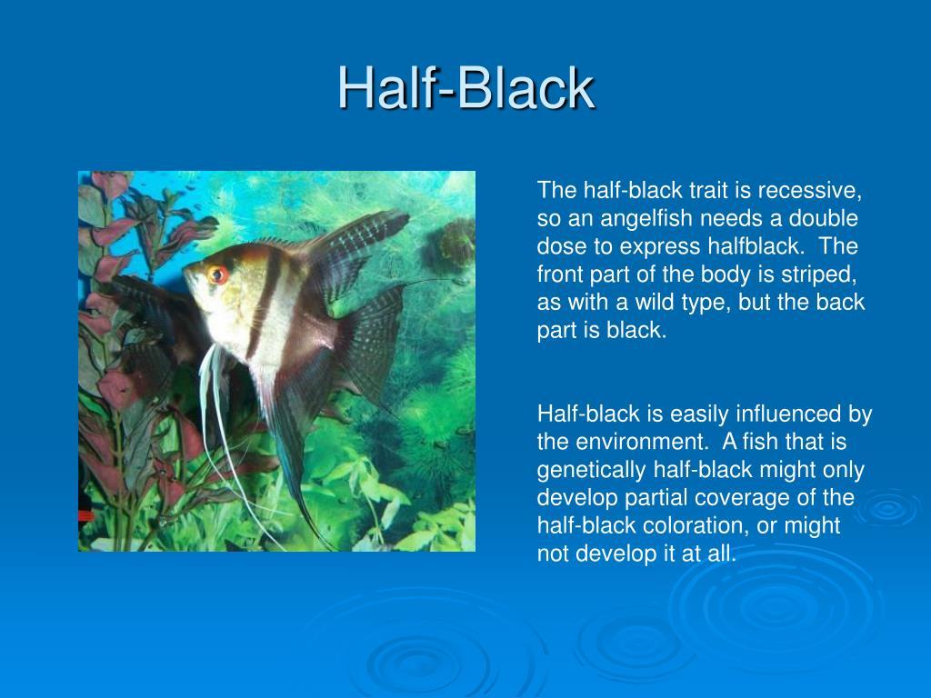Half-Black