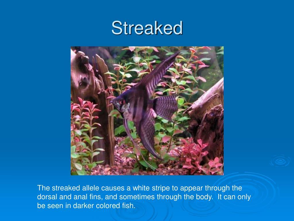 Streaked
