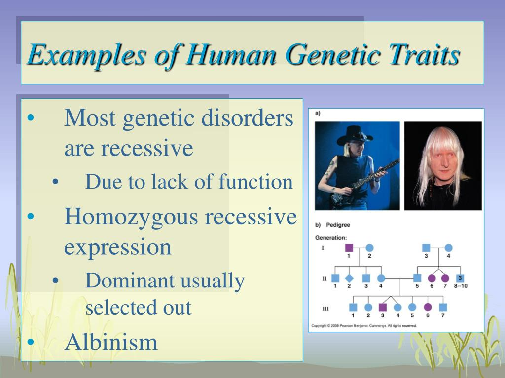 Examples of Human Genetic Traits