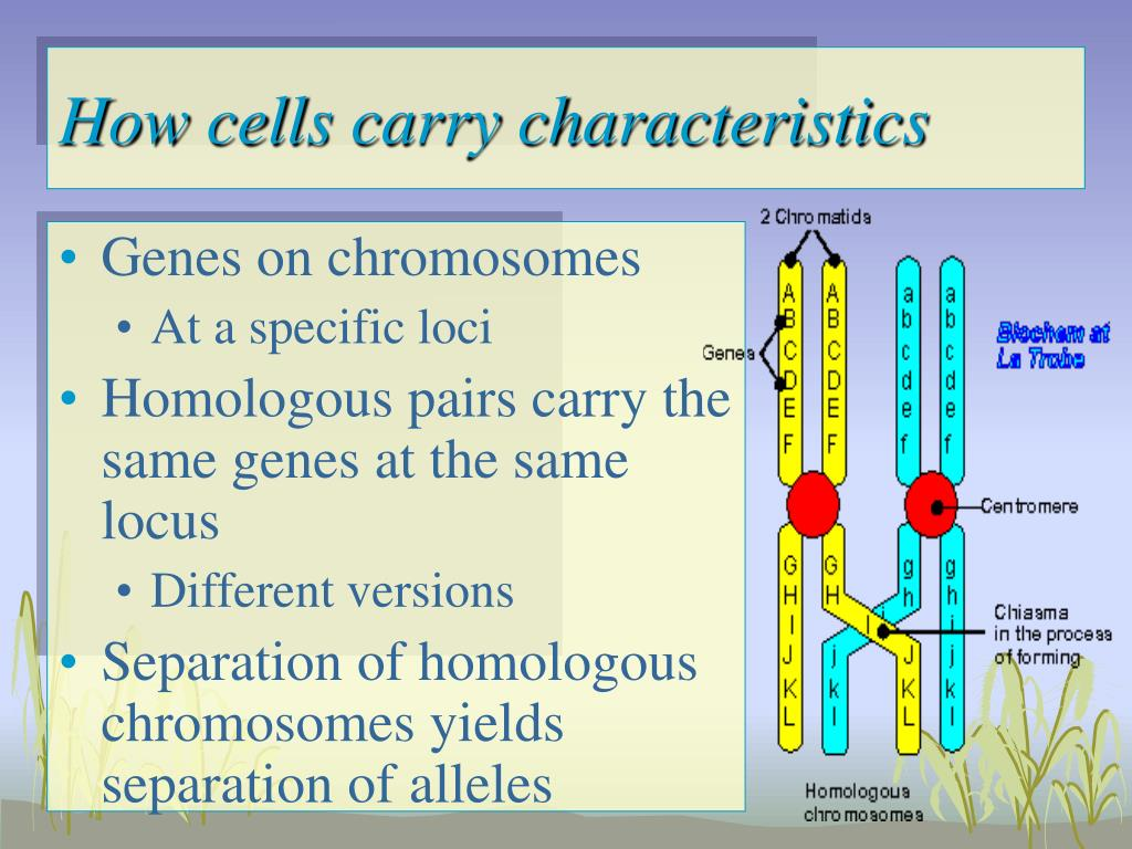 How cells carry characteristics