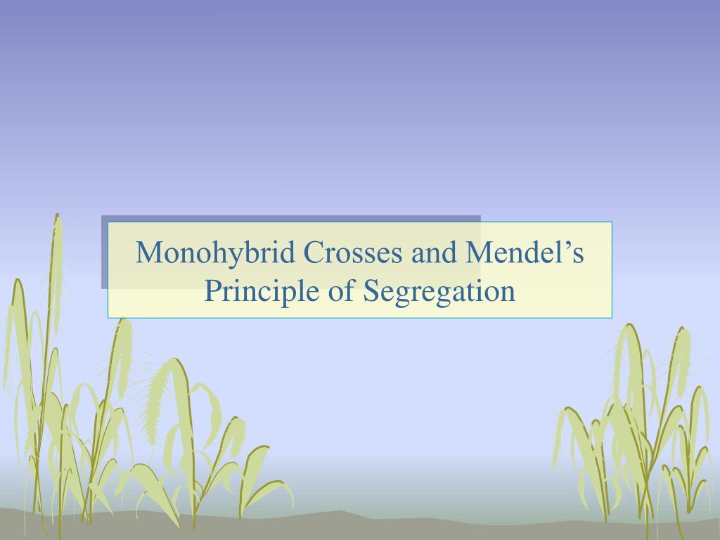 Monohybrid Crosses and Mendel's Principle of Segregation