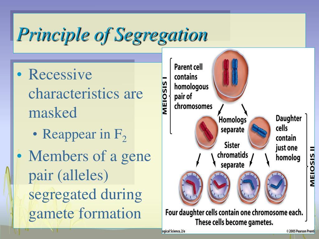 Principle of Segregation